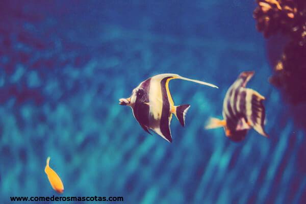 peces fondo azul